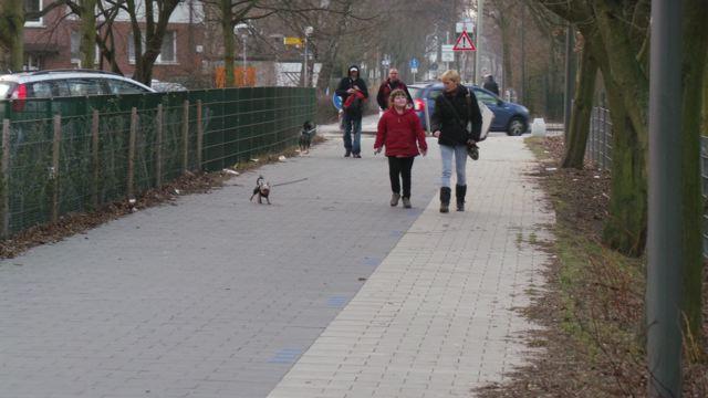 Freizeitweg mitten in Wilhelmsburg:  Den Loop sollen sich hier Fußgänger, Radfahrer und Skater teilen © Reidl