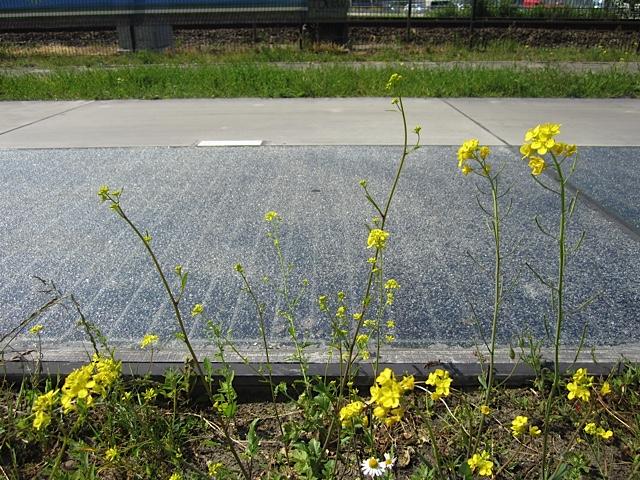 Die Oberfläche der einzelnen Radwegelemente ist stets rau © SolaRoad Netherlands