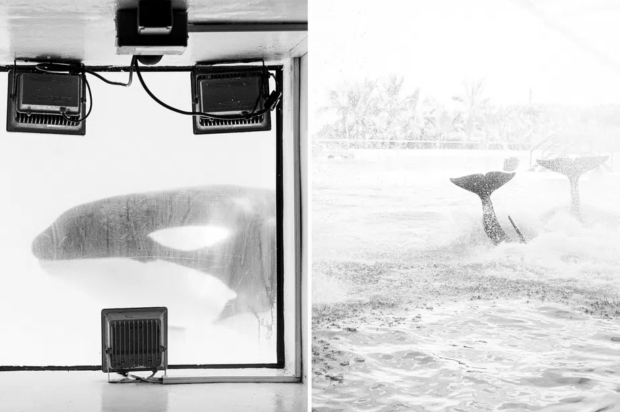 Und was will der Wal? © Eduardo Diaz