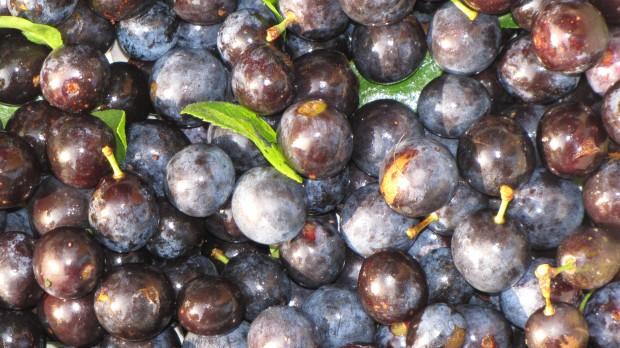 Oporto statt Früchtetee