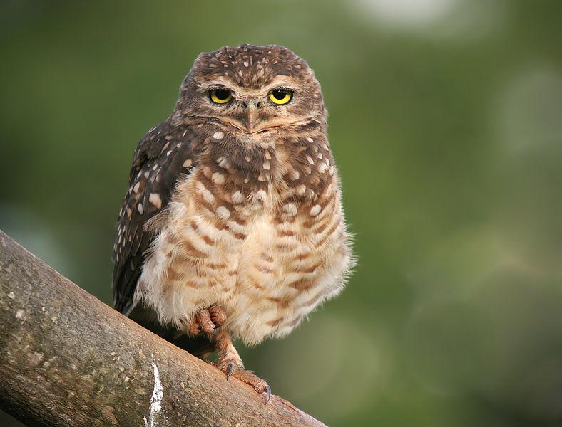 Partnersuche owl