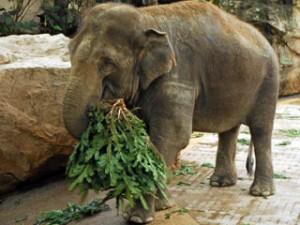 schlaue fragen fressen elefanten weihnachtsb ume kinderzeit blog. Black Bedroom Furniture Sets. Home Design Ideas