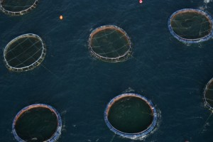 Aquafarming/ © Gavin Newmann/Greenpeace