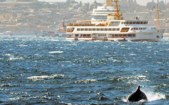 Dass es in ihrer Stadt Delfine gibt, wissen viele Menschen in Istanbul nicht/ © Luisa Stelling