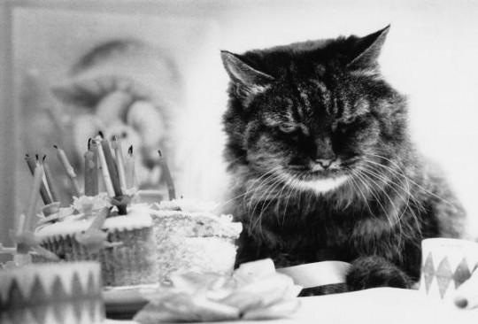 Geburtstag feiern kann jeder! Kinder, Hunde, Katzen, Meerschweinchen ud auch die KinderZEIT/ © Getty Images