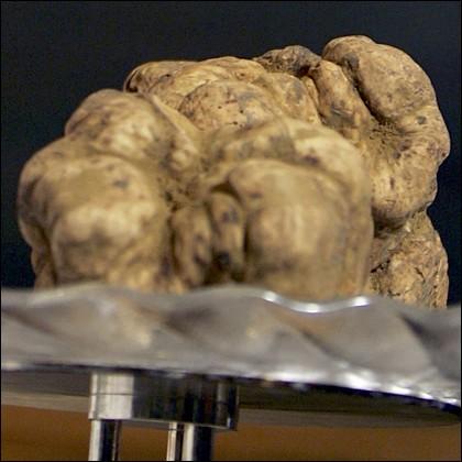 truffle-421.jpg