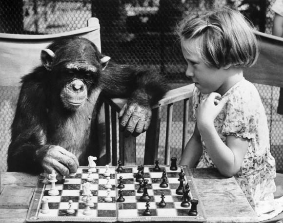 Chess Chimp