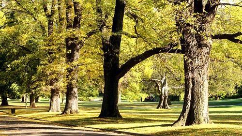 Melbourne-E-Mail-Bäume