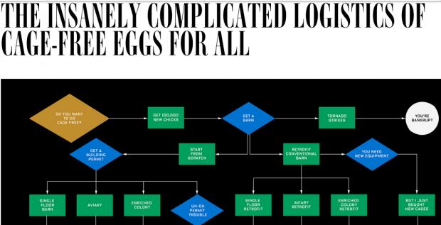 Warum Eier aus Käfighaltung uns noch lang erhalten bleiben