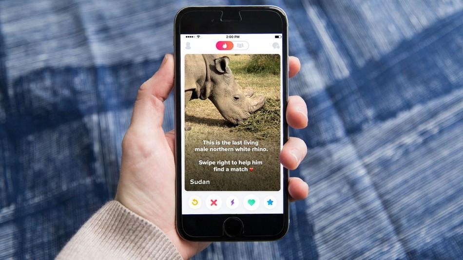 Tinder will das letzte Nashorn retten