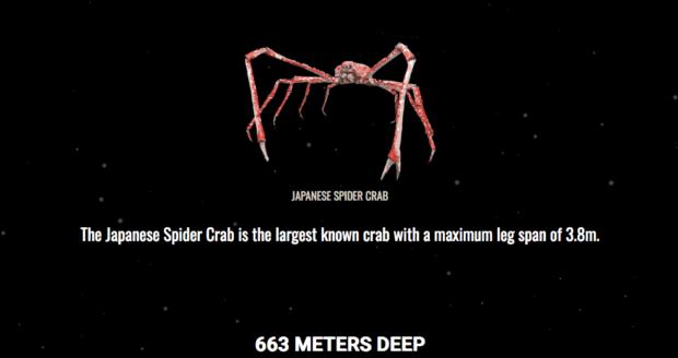 """The Deep Sea"": In 600 Metern Tiefe lebt eine japanische Riesenspinne. © Screenshot Neal.Fun"
